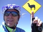 Bolivia - matteo cartello lama