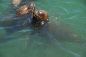 leoni marini - iquique
